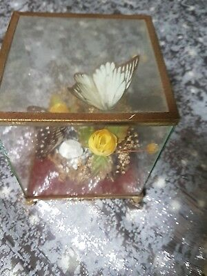 A Pair Of Butterflies In A Glass Dome