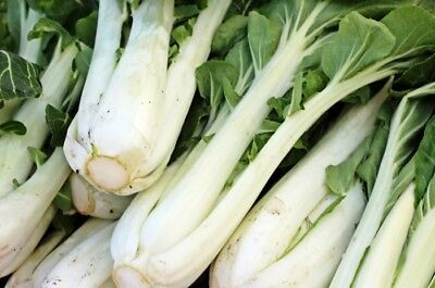 White Stem Pak Choi Seed - Non-Heading Chinese Cabbage Garden Seeds (1gr - 50gr)