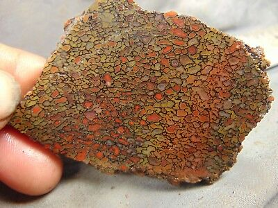 dinosaur bone agate rough slab