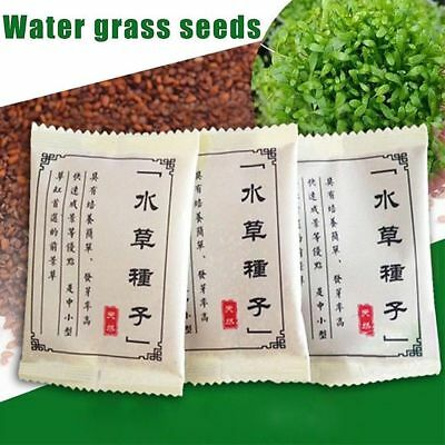 Plant Seeds Fish Tank Aquarium Aquatic Water Grass Garden Decoration Foreground