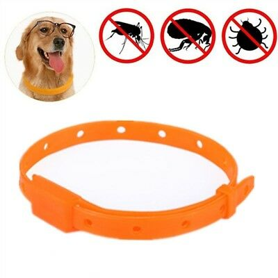 Pet Dog Cat Puppy Kitten Clear Flea Collar Kills Ticks & Fleas KILLER TREATMENT