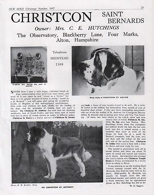 Saint Bernard Dog Breed Kennel Advert Print Page Our Dogs Christcon Kennels 1957