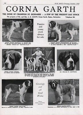Saint Bernard Breed Kennel Advert Print Page Our Dogs Corna-Garth Kennels 1950