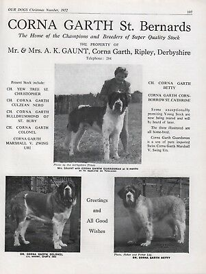 Saint Bernard Breed Kennel Advert Print Page Our Dogs Corna-Garth Kennels 1952