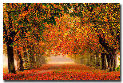 """Autumn Fallen Leaves Forest Path Nature Art Silk Poster Picture 13x20 24x36"""" 003"""