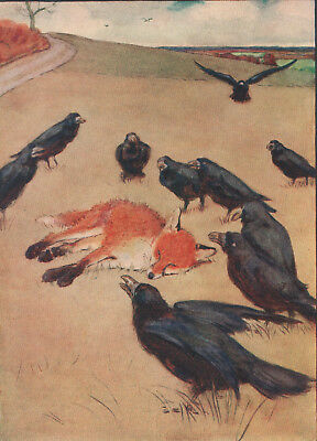 Fox Vixen Crows Death Hunted Cecil Aldin 1912 Original Rare Antique Print Matted