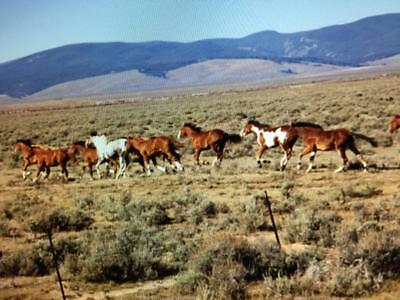 40.7 Acre West Texas Ranch !! No Limits To Build !! Sunset Ranches ! Residential