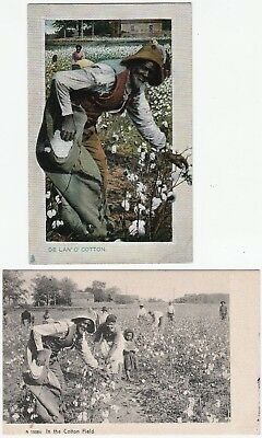 2 Postcards - Black African American Cotton Picking - UNUSUAL Same Man in both