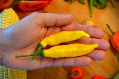 15+ Graines Aji Lemon Drop (Capsicum baccatum) pepper seeds