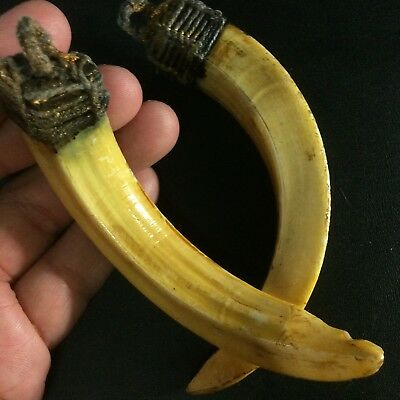 Real Wild BOAR 2 Teeth PIG Hog FANG Swine Thai Bless Amulet Tooth Pendant