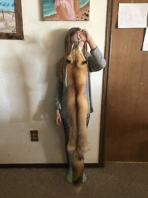 Red Fox Pelt/#1 Select Fur Heavy winter Coat/Quality Tanned/Coyote/Skunk