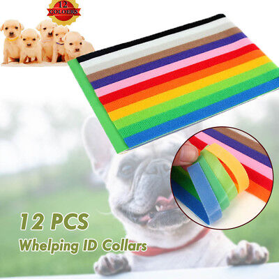 12 Colours Whelping ID Collar Bands Pet Puppy Kitten Identification Tags Band AU
