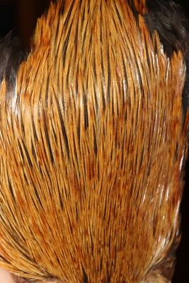 Fly Tying Greenwell Cockerel Neck Cape good feather quality and density