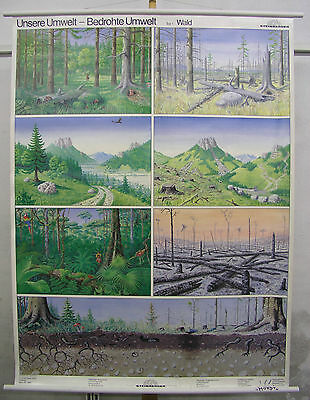 Schulwandkarte Wall Map Mural Image Our Environment Threatened Forest Animals