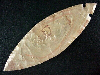 Fine Authentic 4 1/2'' Collector Grade Tennessee Turkeytail Point Arrowheads COA