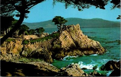 Postcard California CA Monterey Carmel Bay Midway Point Cypress Trees Scenic H-9