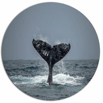 Design Art 'Humpback Whale Tail' Photographic Print on Metal