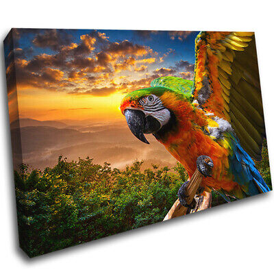 Parrot Bird Tropical Animal Jungle Canvas Poster Print Wall Art Picture AE662