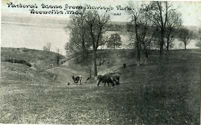 Missouri ~ BOONVILLE ~ Cows Seen From Harley's Park Postcard 12840