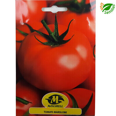 Tomate Valenciano ( 200 semillas ) seeds