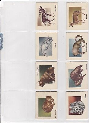 1951 Topps Animals Of The World Card Set Higher Grade Mainly Exmt/nrmt See Scans