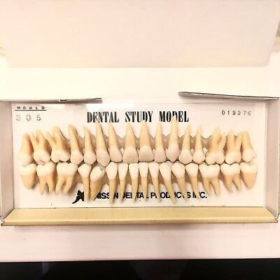 Kilgore Nissin Dental Anatomy COMPLETE Study Model