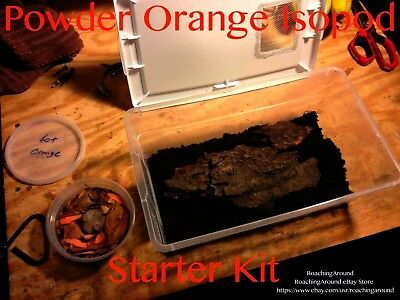 120+Powder Orange Live Isopods Starter Kit.All-In-One.Dubia Roaches Cleaner Crew