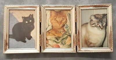 Small Photo Office Desk Frame Crazy Cat Lady Feline Picture Photograph Pet Kitty