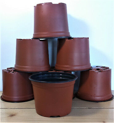 """7 x 4""""inch Pots (10.5cm) for young plants/seedlings/cuttings potting up 11vol 3"""""""
