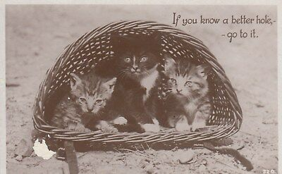 Vintage B&W Postcard, 3 cats in a Basket c1930s, (q), used Postage Combined