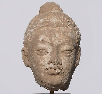 Gandhara Stucco Buddha Head '100 to 400 AD'