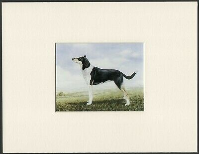 Smooth Collie Old 1960'S Dog Art Print Ready Mounted