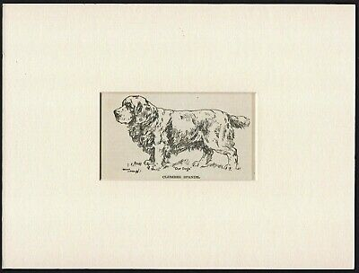CLUMBER SPANIEL OLD VINTAGE 1912 DOG ART PRINT by ARTHUR WARDLE READY MOUNTED