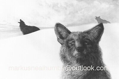 """Limited Edition Print - """"Coyotes"""""""