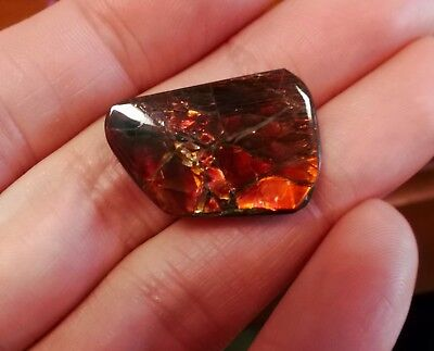 Ammonite ammolite unique red green color changer stone