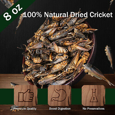 Dried Crickets Food for Bearded Dragons, Wild Birds, Chicken, Fish