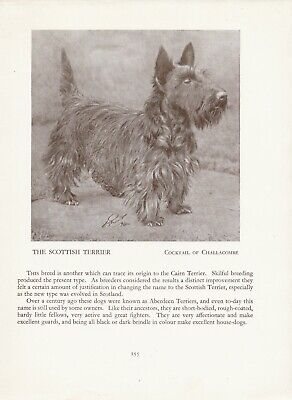 SCOTTISH TERRIER NAMED DOG AND PUPPY OLD ORIGINAL DOG PRINT FROM 1934