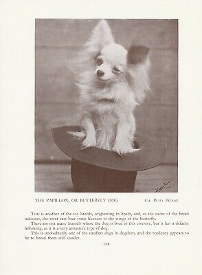 Papillon In A Hat Old Vintage 1934 Named Dog Print Page