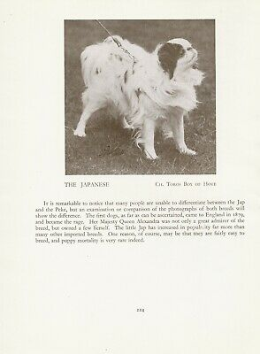 Japanese Chin Old Vintage 1934 Named Champion Dog Print Page