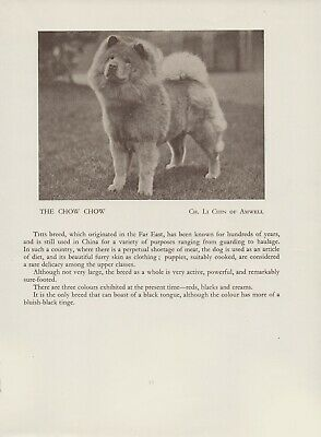 Chow Chow Old Vintage 1934 Named Dog Print Page