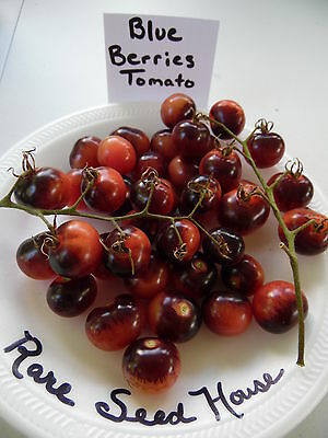 Rare Blueberries Tomato! 20 Seeds Combined S/H See our Store for rare seeds