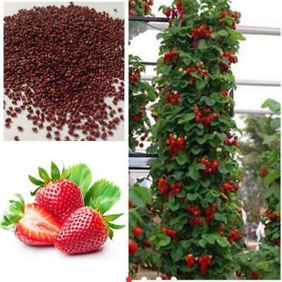 UK 200Pcs/Bag Red Climbing Strawberry Seeds Garden Fruits Plants Delicious Sweet