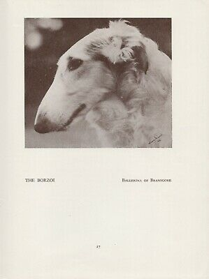 Borzoi Russian Wolfhound Head Study Old Vintage 1934 Named Dog Print Page