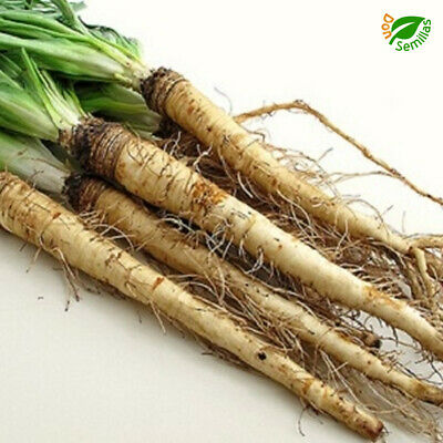 Tomate Minibel Cocktail tipo Cherry ( 1 gr / 350 semillas) seeds - Mini Bell