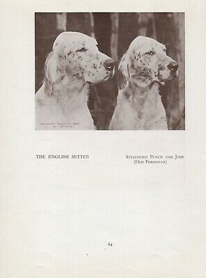 ENGLISH SETTER TWO UP NAMED DOGS OLD ORIGINAL DOG PRINT PAGE FROM 1934