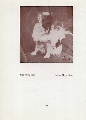 Japanese Chin Old Vintage 1934 Named Champion Dog Page Print