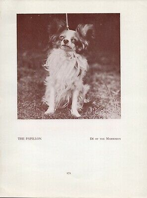 Papillon Old Vintage 1934 Named Dog Print Page