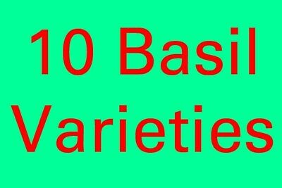 10 Varieties Of Basil * 300 Seeds * For Basil Lovers * Free Shipping
