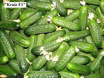 Heirloom Vegetable seeds Cucumber F1. Hybrid. High-Yielding. Big choice!