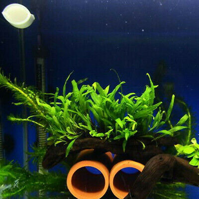 100pcs Xmas Moss-Live Aquarium Plant Java Fish Tank Fern Aquatic Seed Green Pond